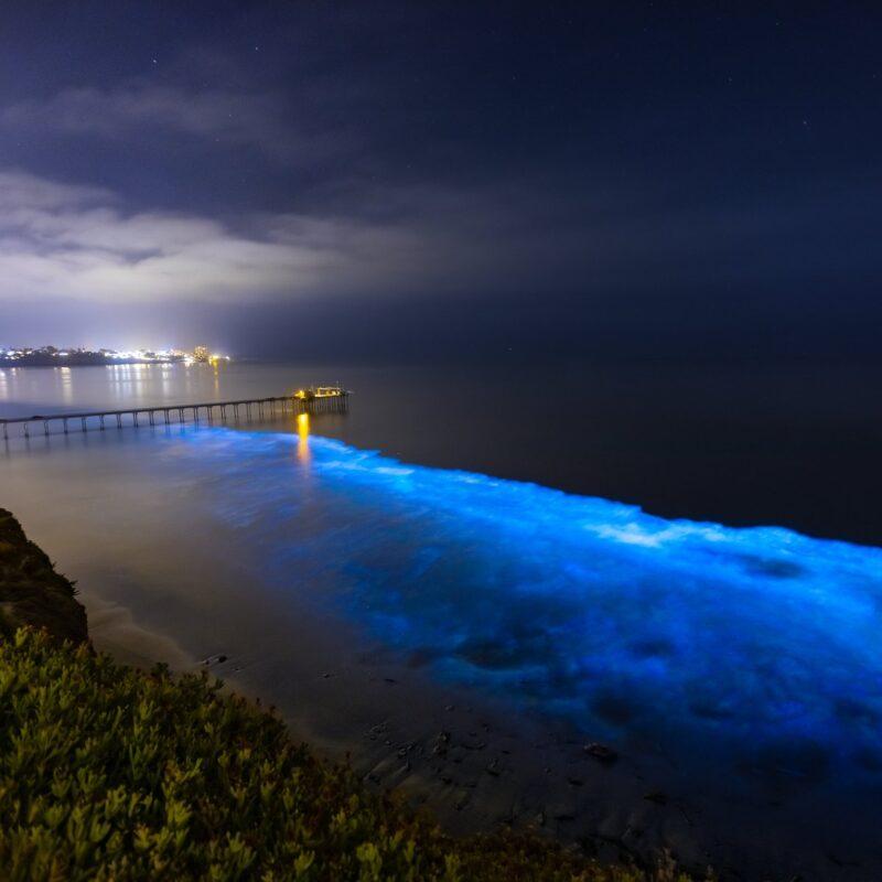 Bioluminescent water in San Diego, California.