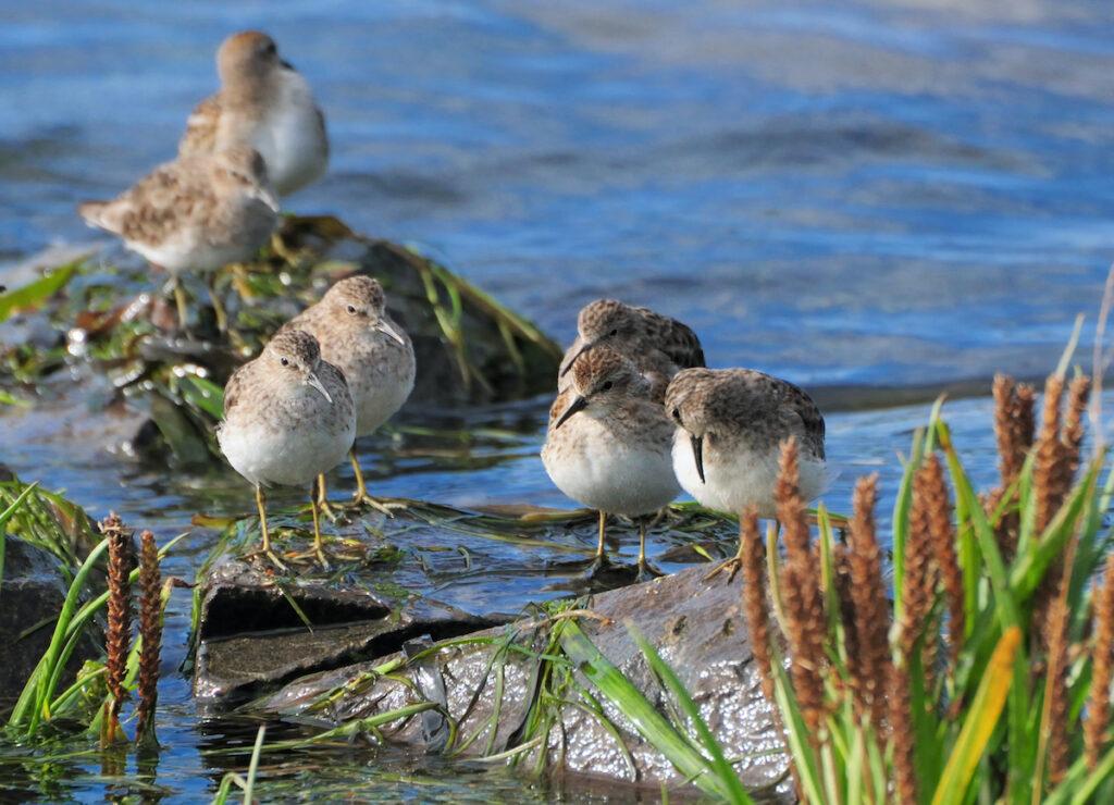 Birds at Willapa Bay National Wildlife Refuge.