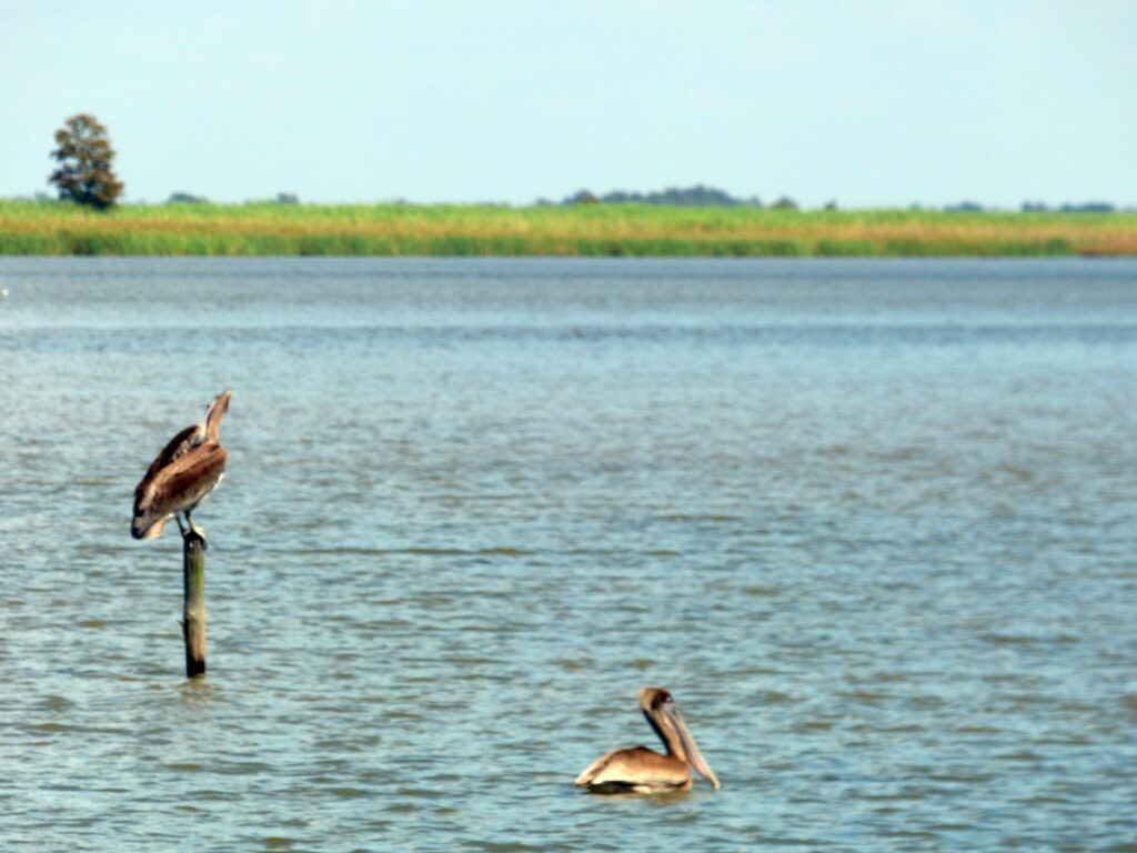 Birds in Mobile, Alabama.