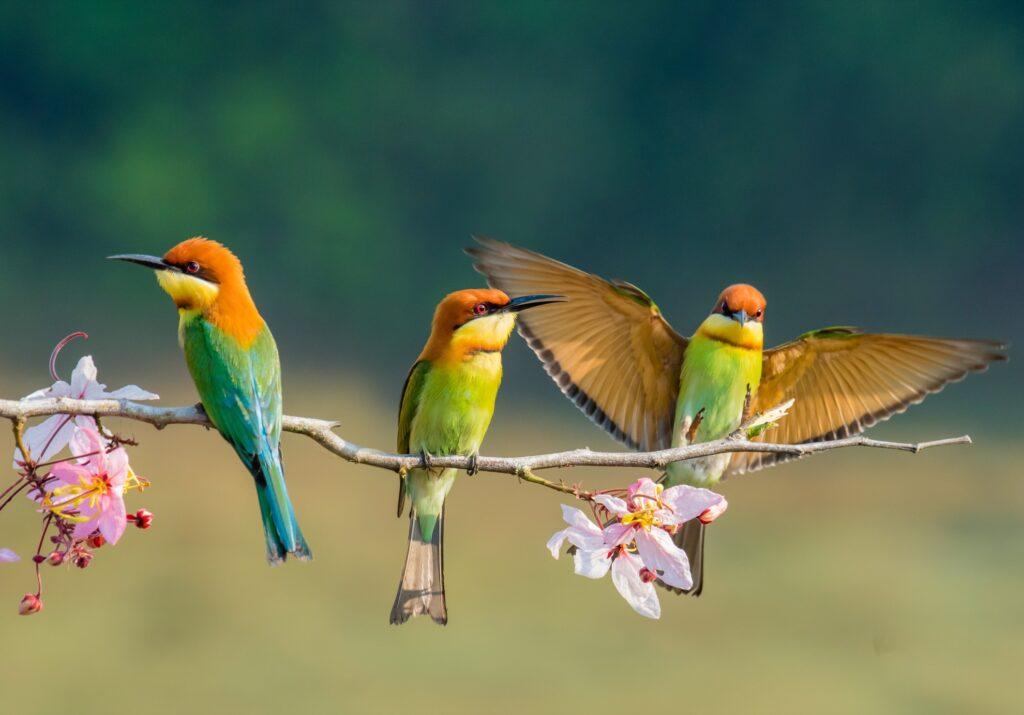 Birds in Thailand.