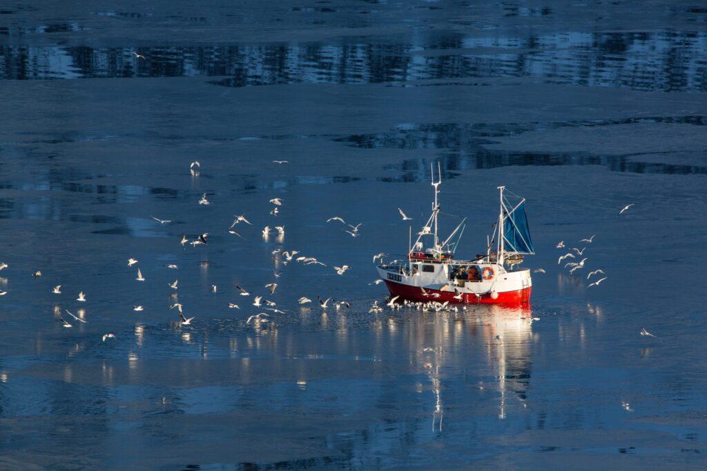 Birds surrounding a fishing boat in Lofoten Islands.