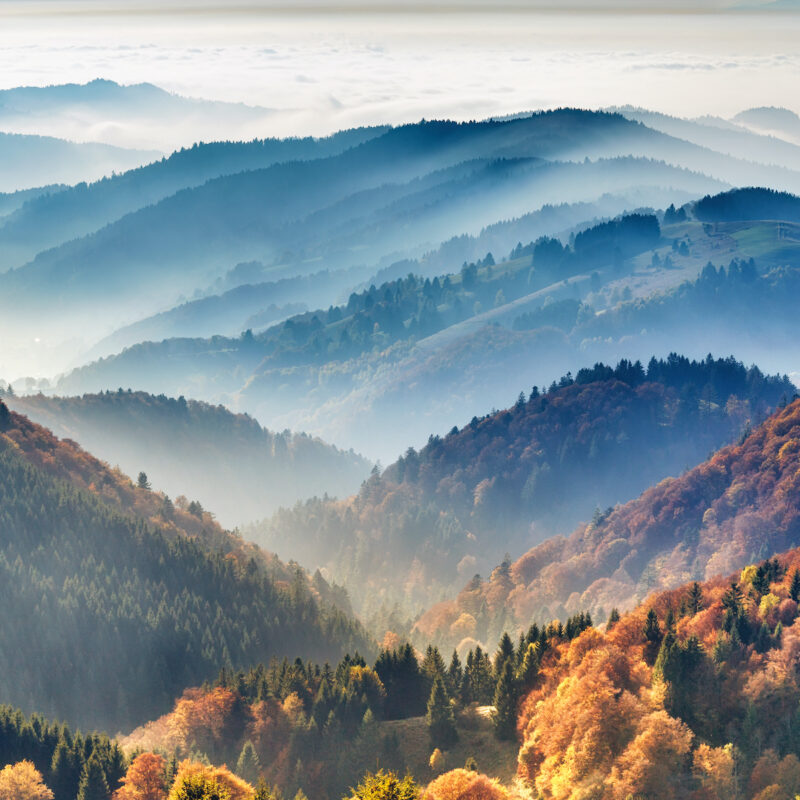 Black Forest region in Germany.