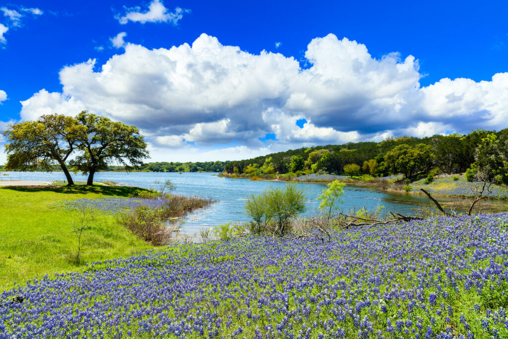 Bluebonnets along a lake in Texas Hill Country.