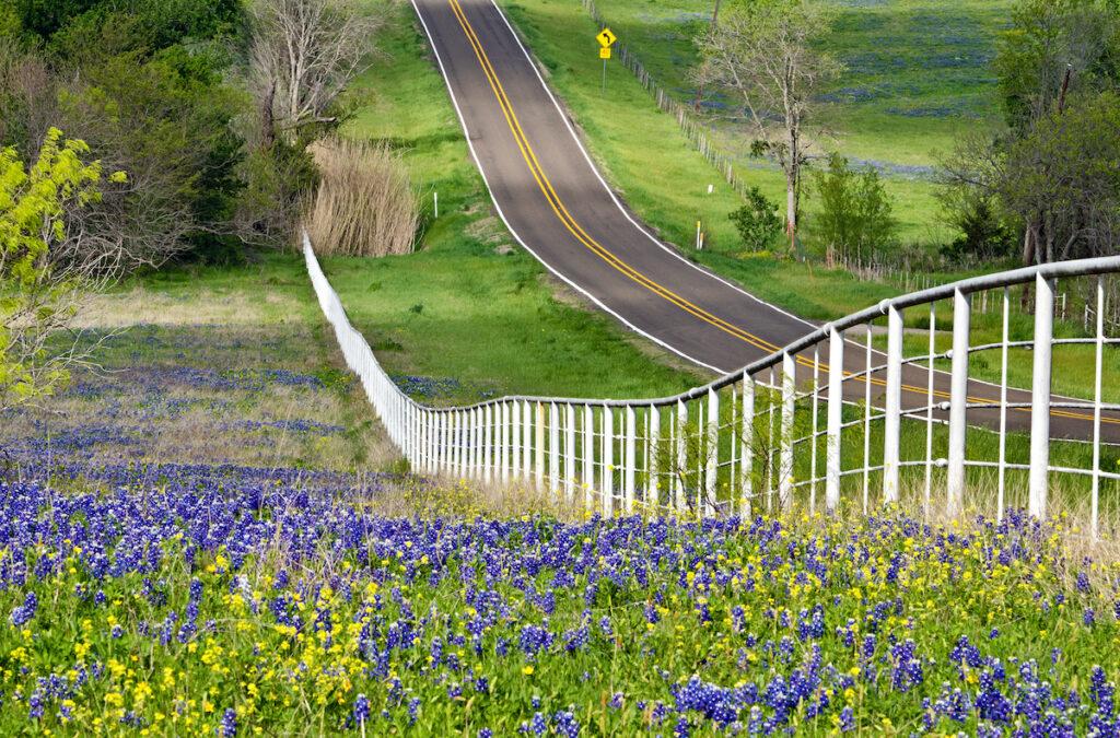 Bluebonnets near a road.