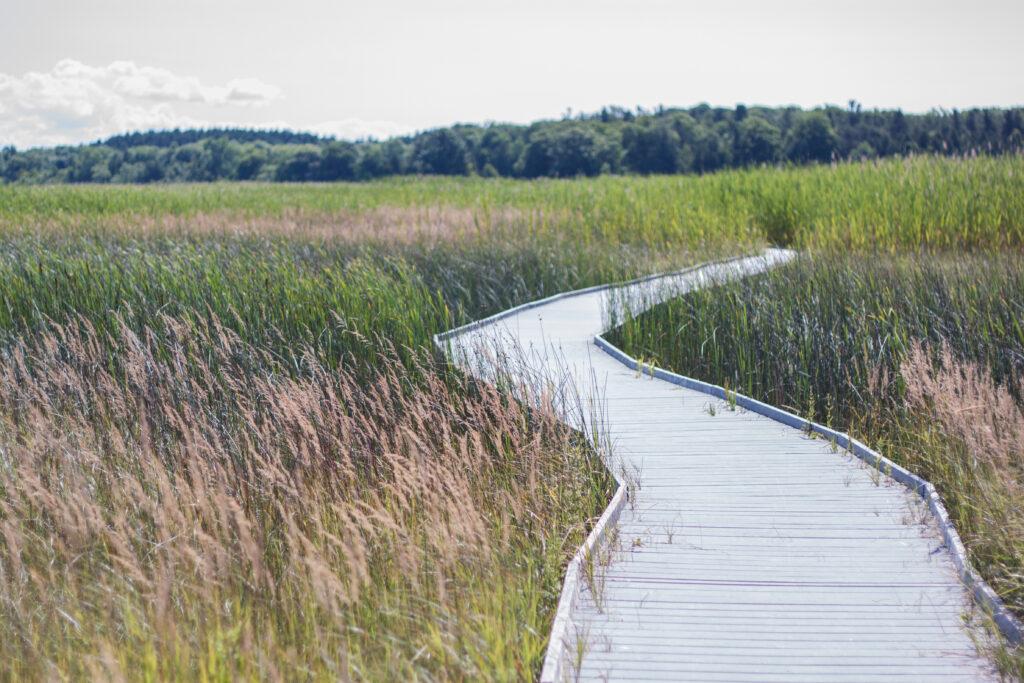 Boardwalk through the marshland