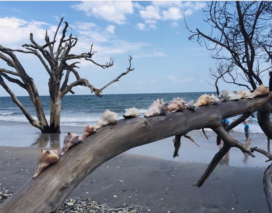 Botany Bay Beach Walk in Edisto Beach State Park.