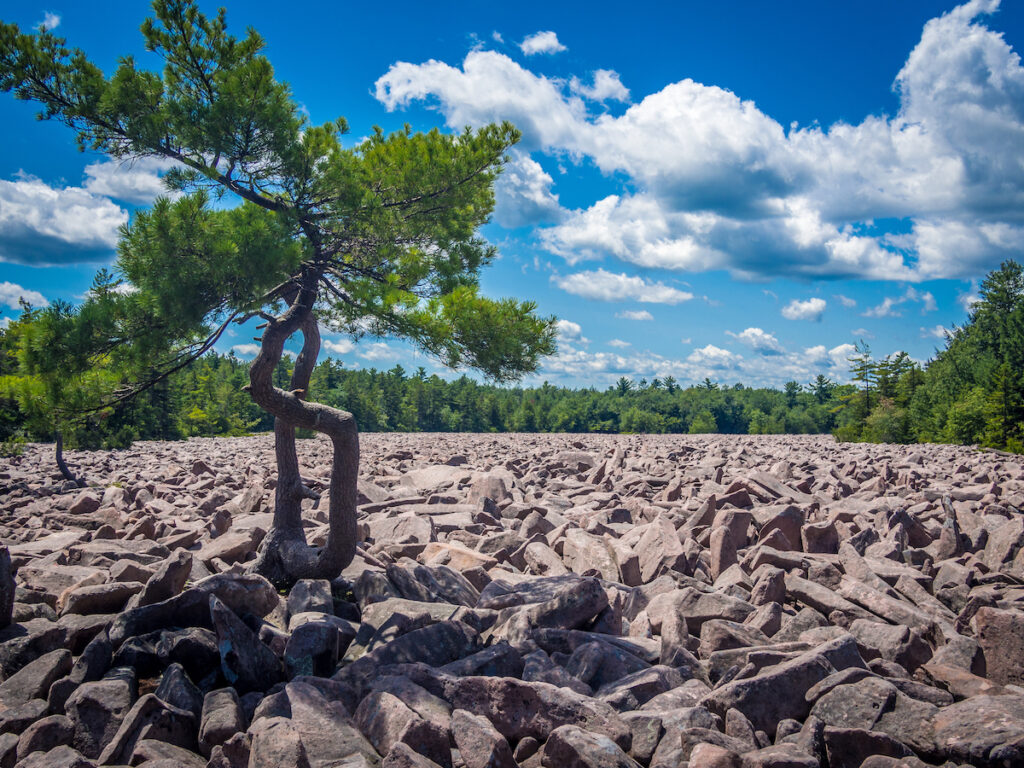 Boulder Field at Hickory Run State Park.