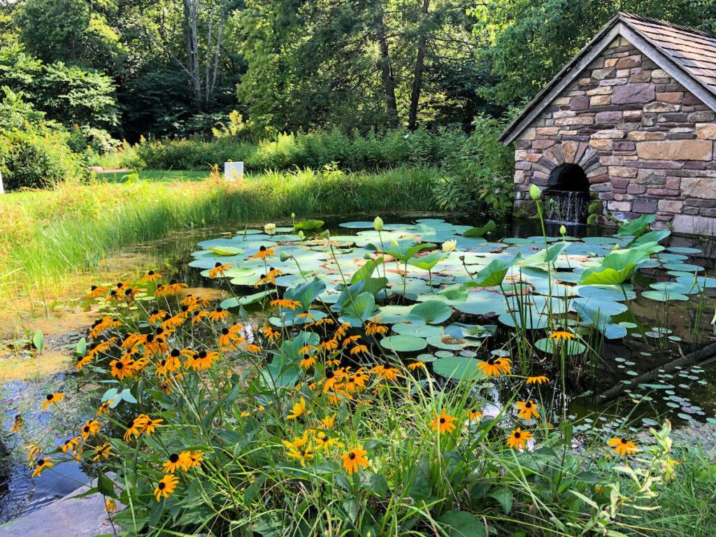 Bowman's Hill Wildflower Preserve in Pennsylvania.