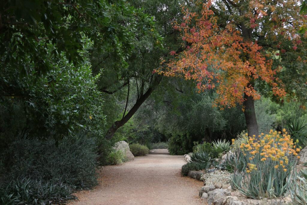 Boyce Thompson Arboretum in Superior.