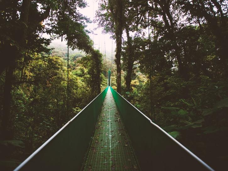 Bridge through the rainforest.