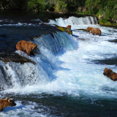 Brooks Falls, Katmai National Park, Alaska.