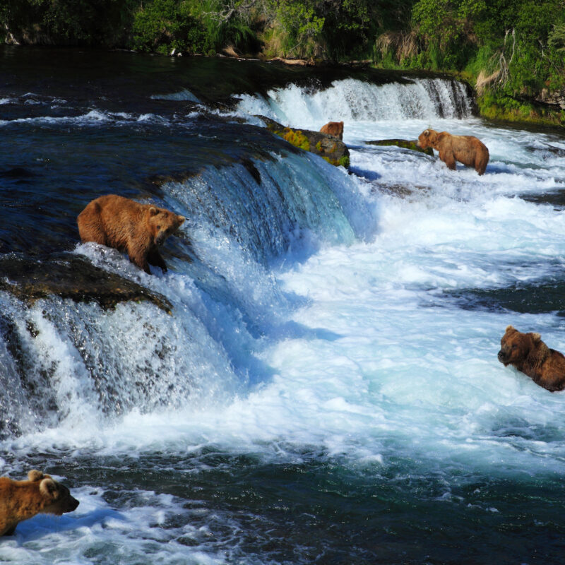 Brooks Falls, Katmai National Park, Alaska.