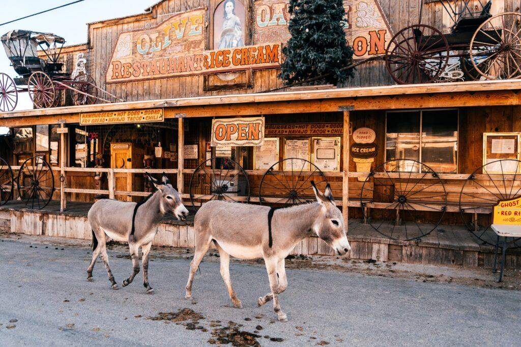 Burros on main street in Oatman.