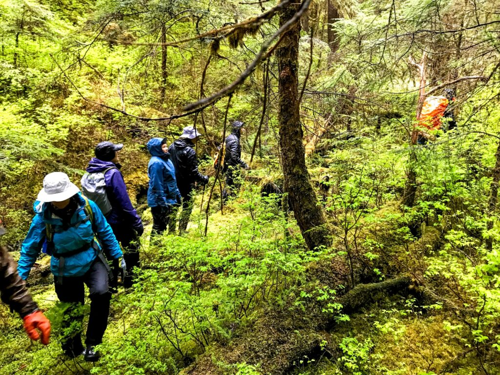 Bushwacking through the Tongass Forest.