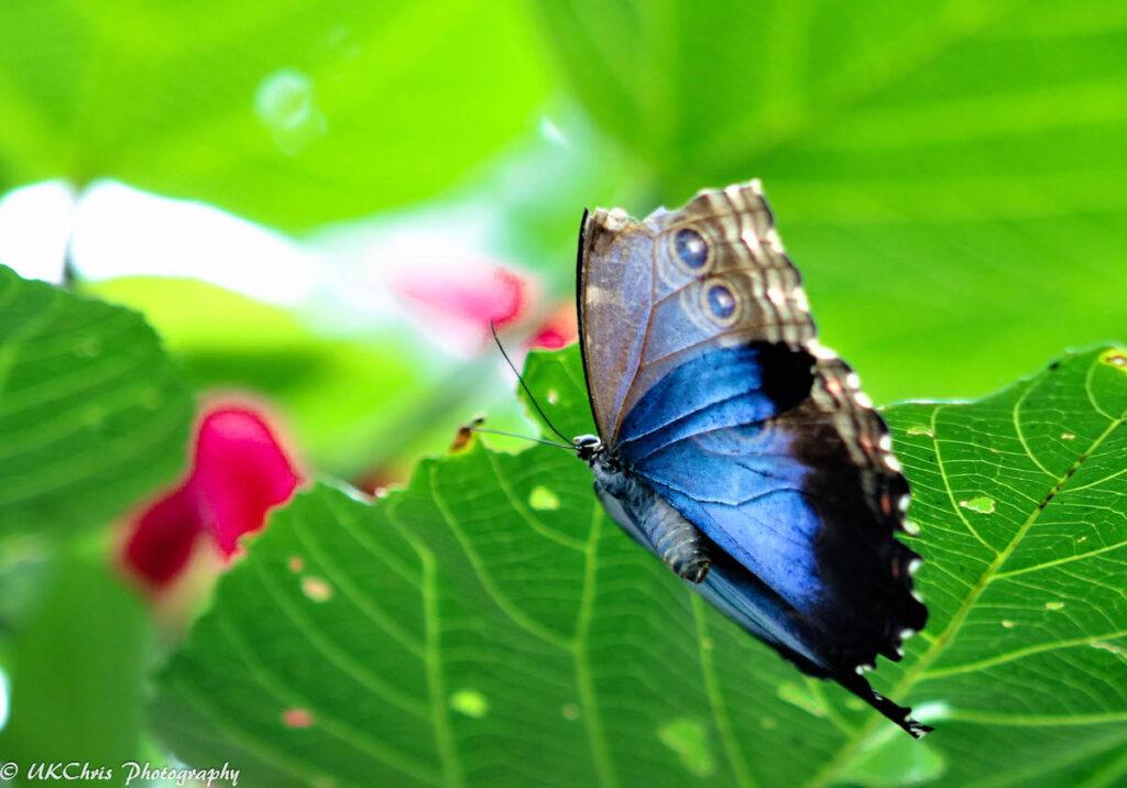 Butterfly Conservatory, Niagara Parks Botanical Gardens.