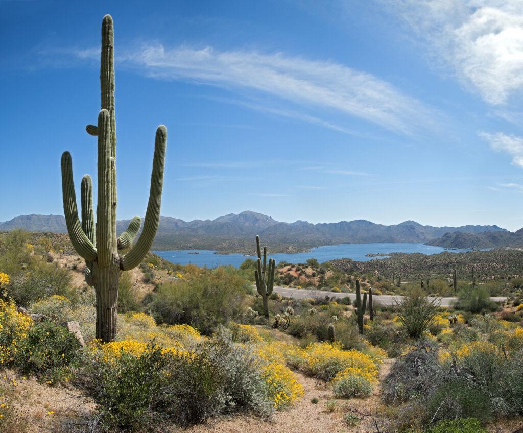 Cacti along the Jojoba Trail at Bartlett Lake.