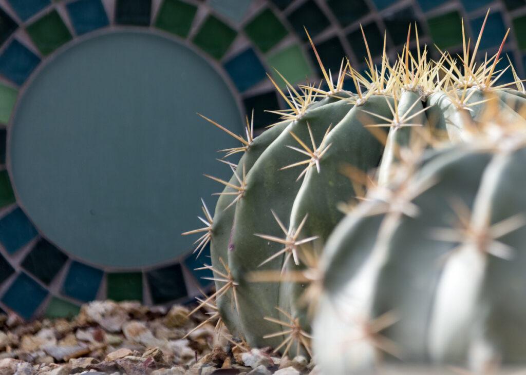 Cacti with a mosaic at the Desert Botanical Garden in Phoenix, Arizona.