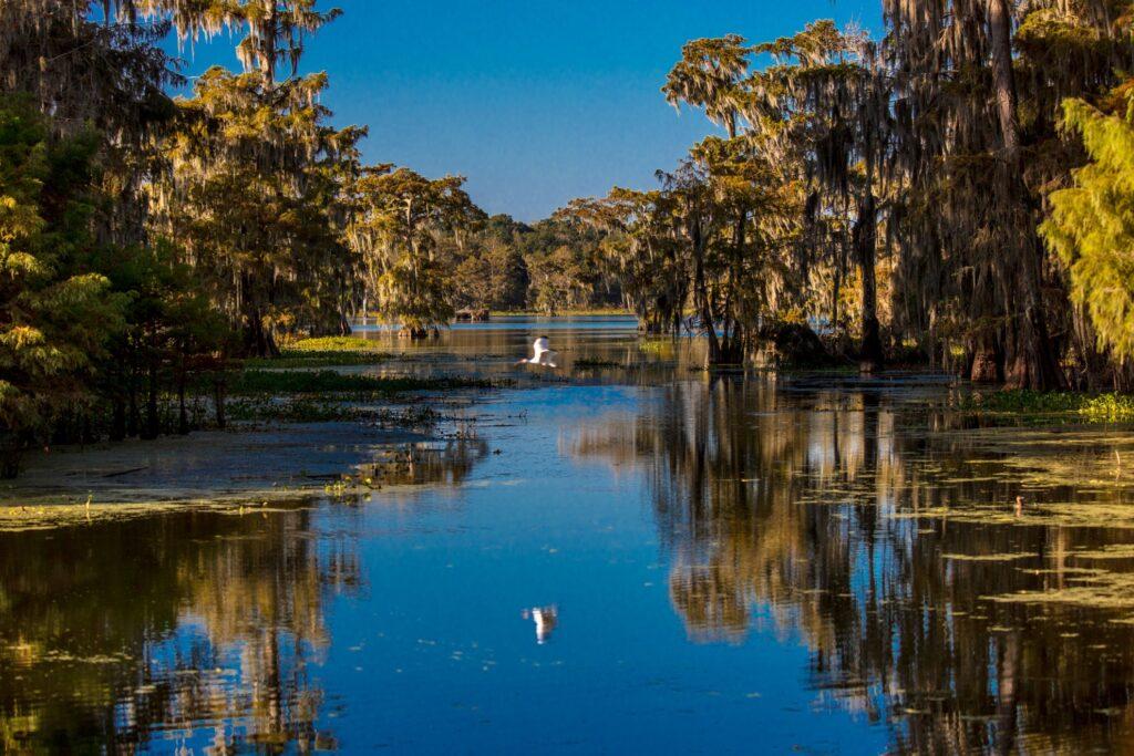 Cajun Swamp in Lafayette, Louisiana.