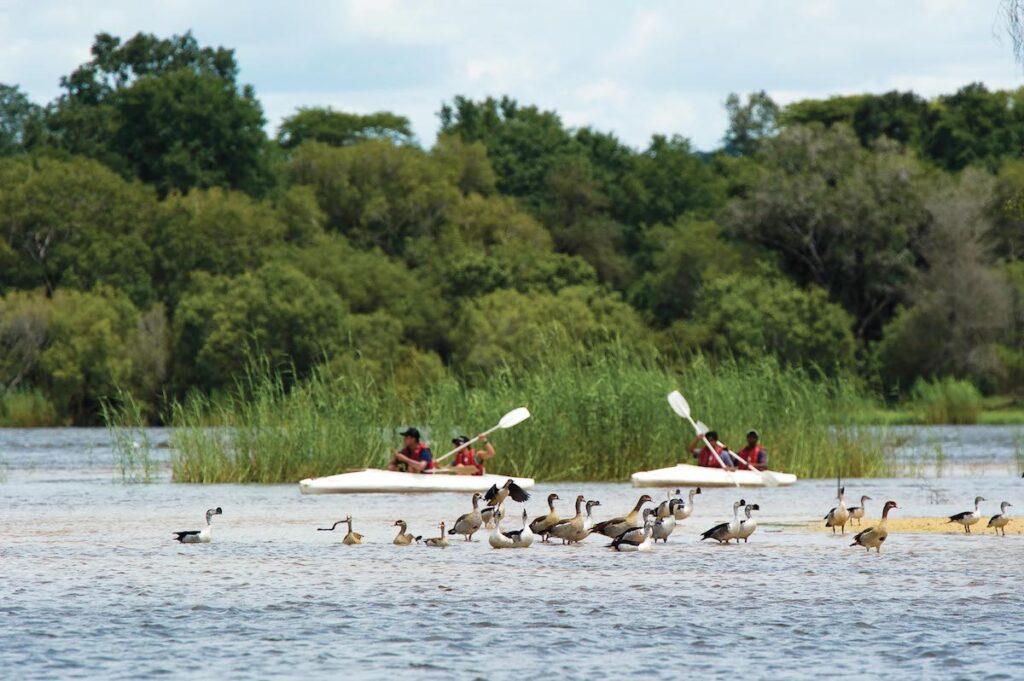 Canoeing near Victoria Falls.