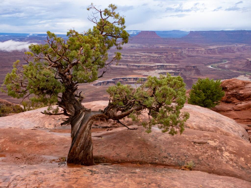Canyonlands National Park in Utah near Moab.
