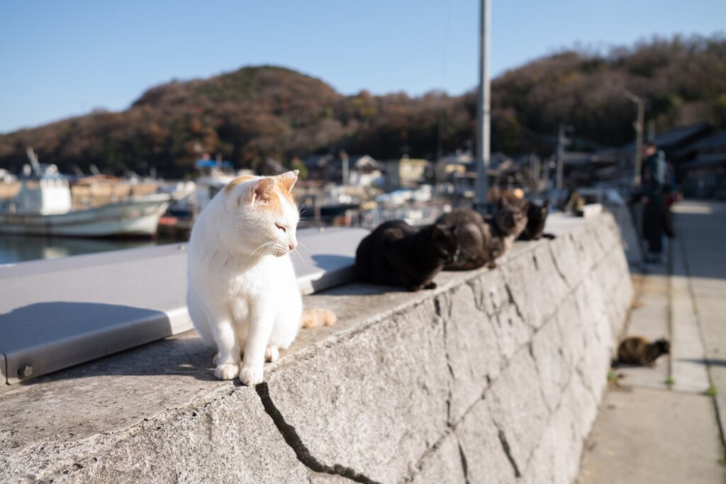Cats on Japan's Cat Island.