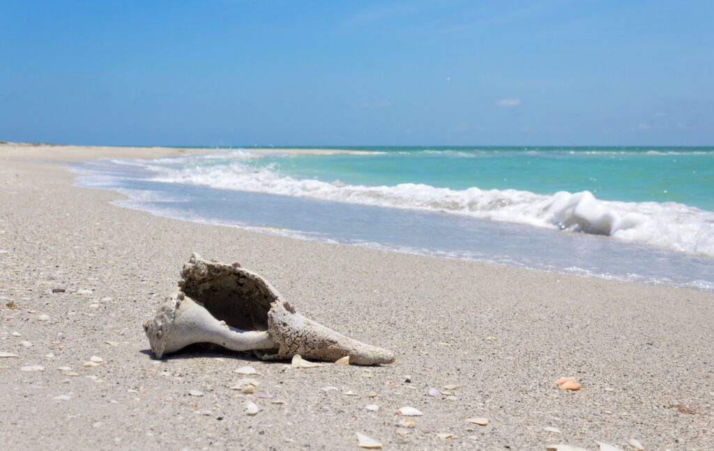 Cayo Costa State Park in Florida.