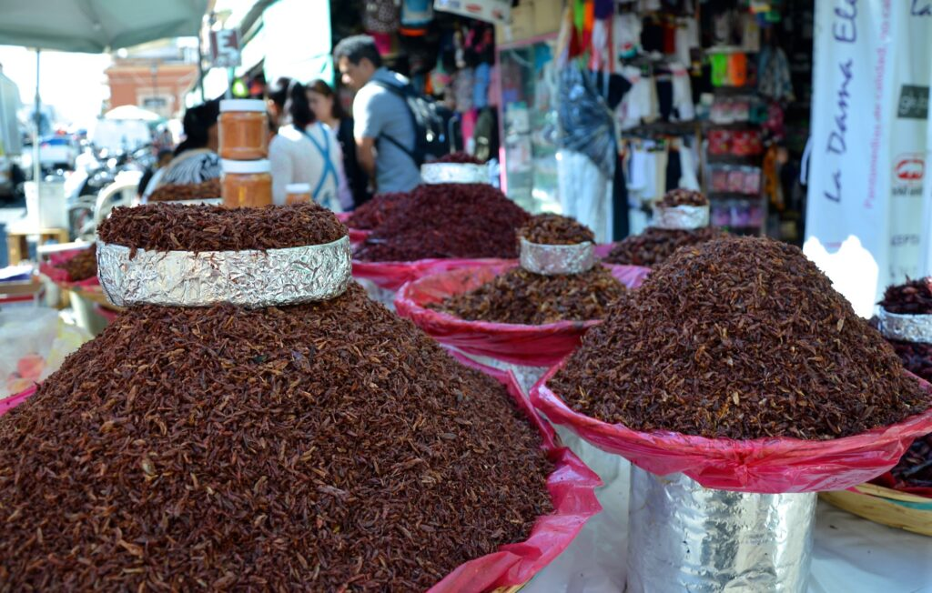Chapulines for sale in Oaxaca, Mexico.