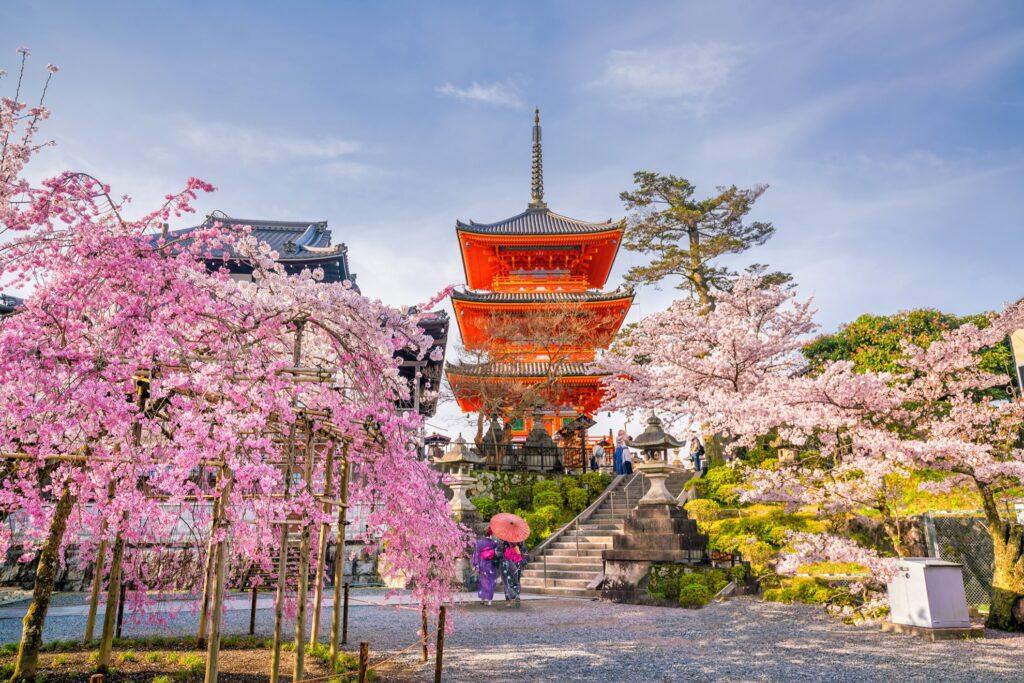 Cherry blossom season in Kyoto, Japan.