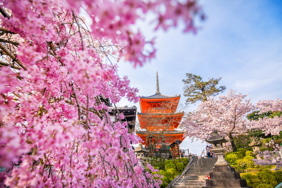 Cherry blossoms in Kyoto, Japan.