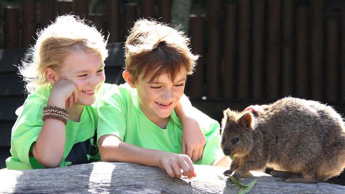 Children feeding a wombat at Taronga Zoo in Sydney