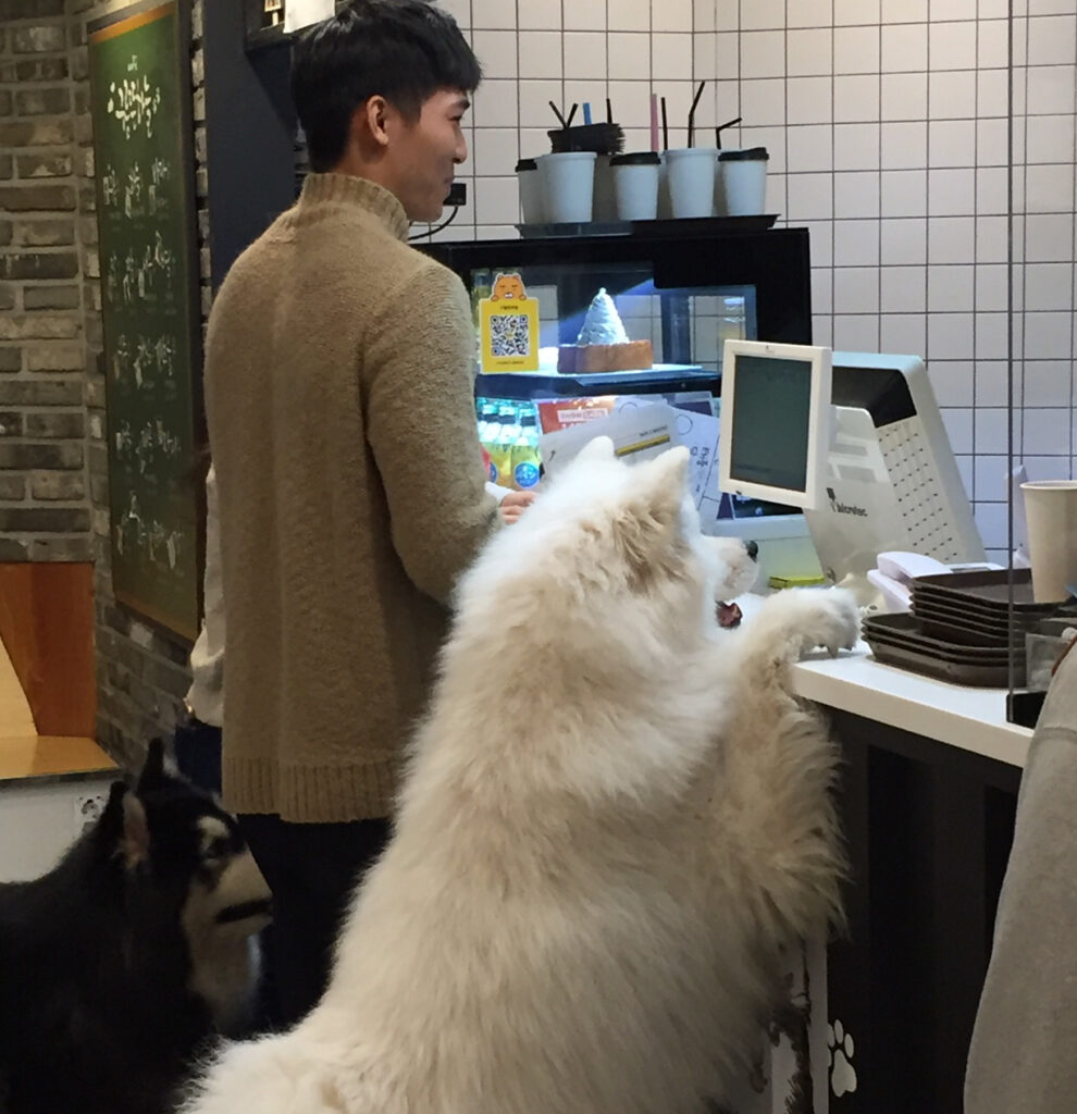 Clouds In The Sky dog cafe in Seoul, South Korea.
