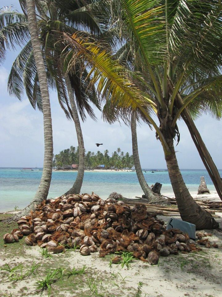 Coconut trees in Isla Diablo.