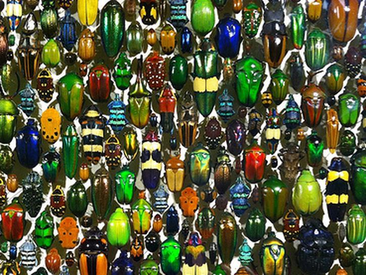 Colorful, glittering beetles