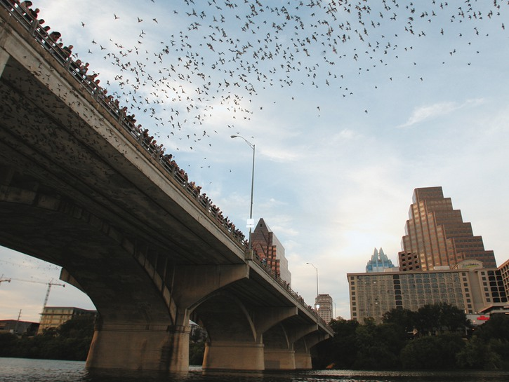 Congress Bridge Bats Austin