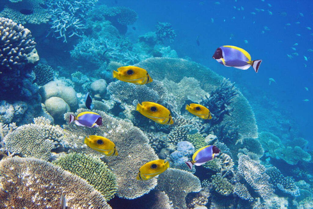 Coral reef views off the coast of Mauritius.
