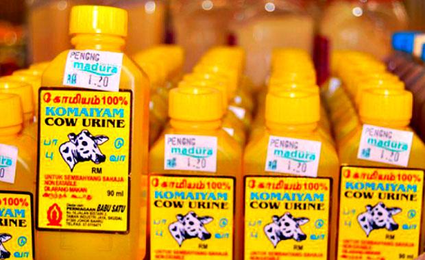 Cow urine soda
