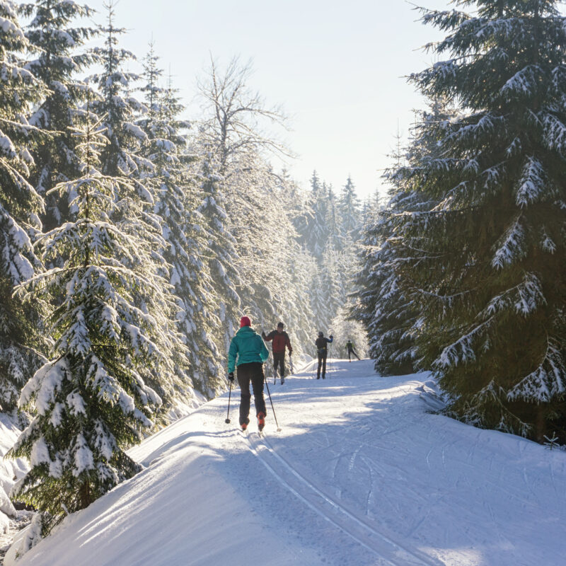 Cross-country skiers in a snowy forest.