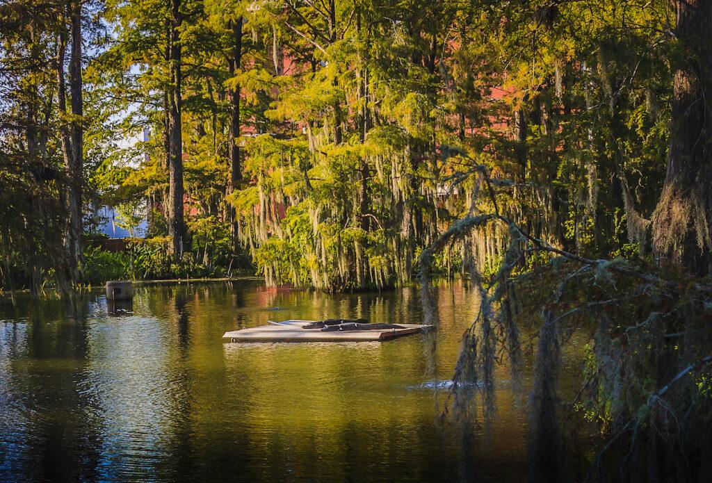 Cypress Lake in Lafayette.