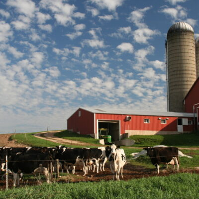 Dairy Farm in Wisconsin