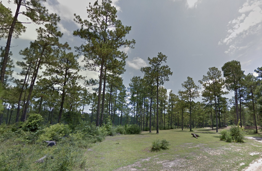 De Soto National Forest in Brooklyn, Mississippi.