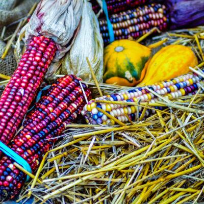 Decorative corn and pumpkins on a farm display.