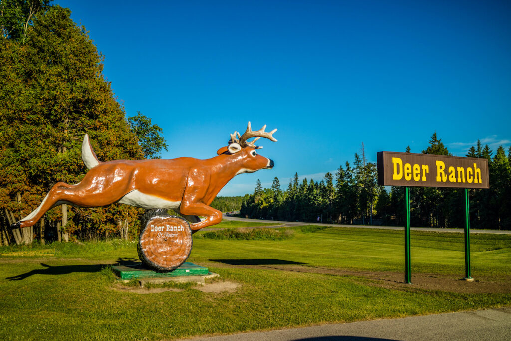 Deer Ranch in St. Ignace, Michigan.