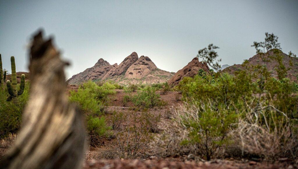 Desert landscape near Phoenix in Papago Park.