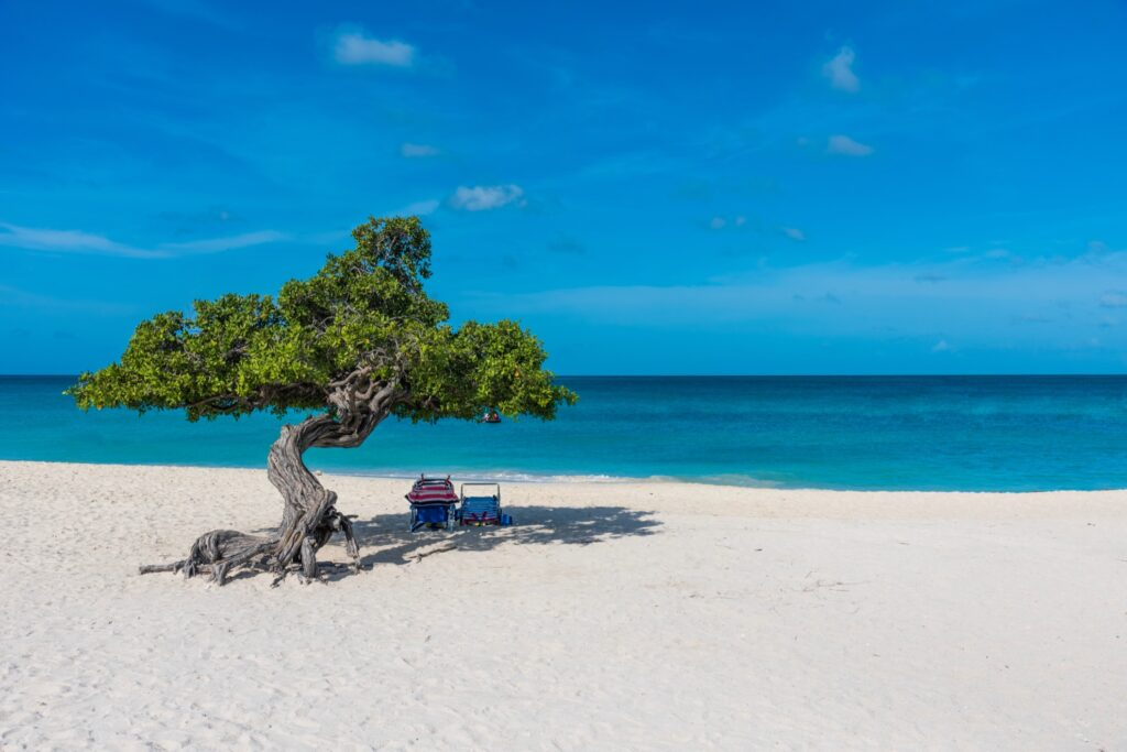 Divi Divi tree on Aruba's Eagle Beach.