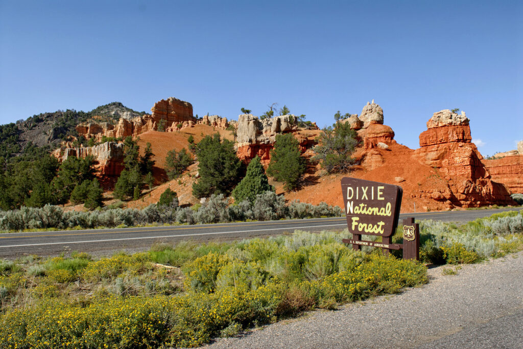 Dixie National Forest in Utah.