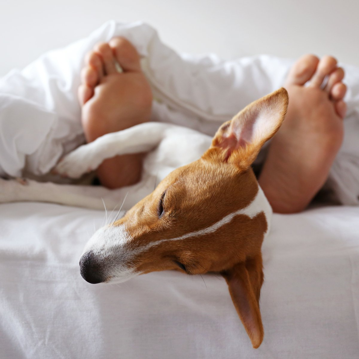Dog at Hotel.