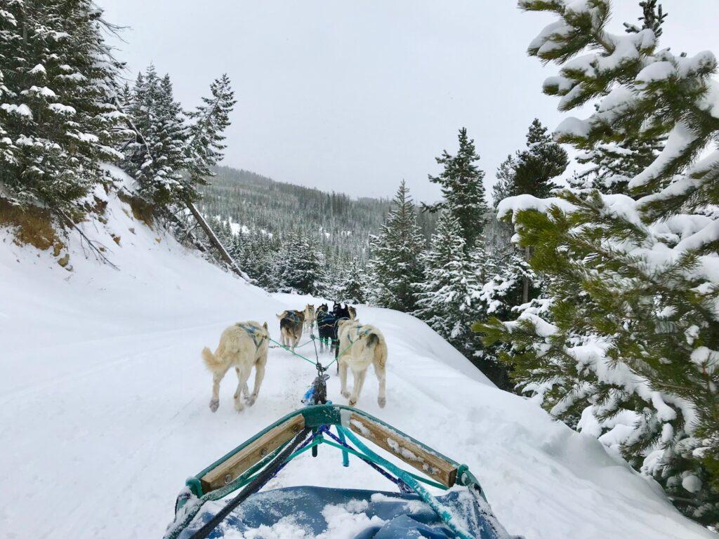 Dog sledding in Yellowstone during winter.