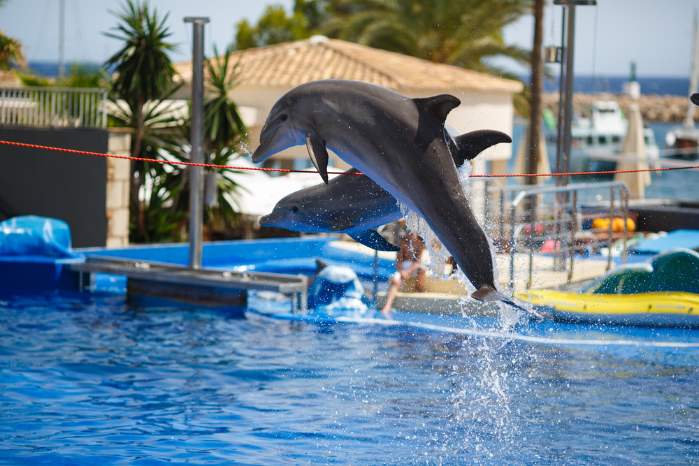 dolphins at palma aquarium