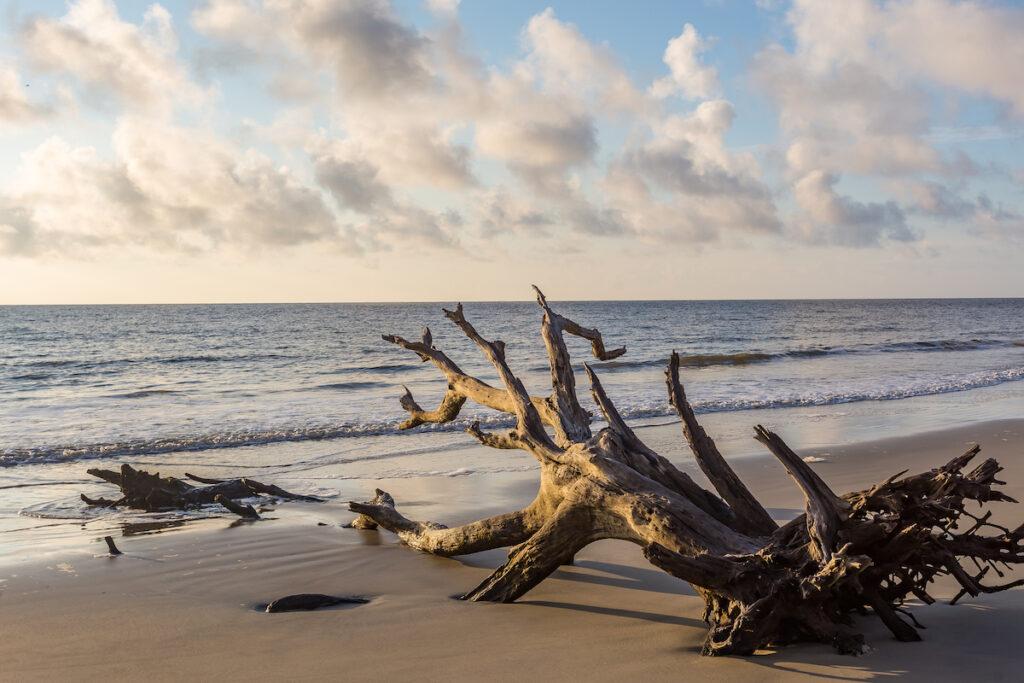 Driftwood Beach on Jekyll Island.