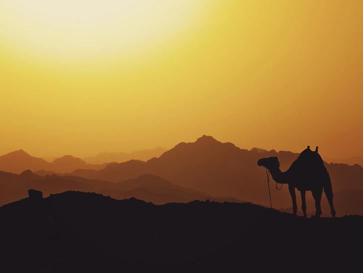 Egypt, desert, camel